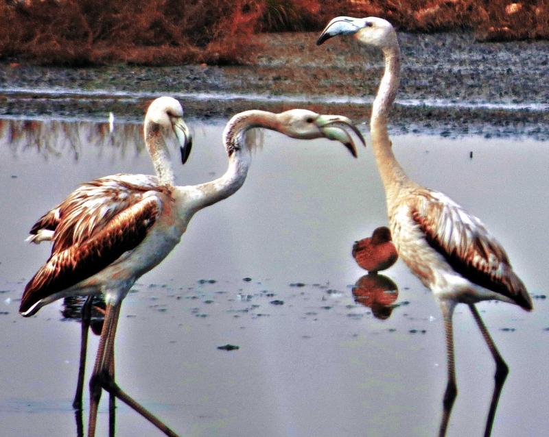 Kuşların Hiç Görmediğiniz Davranışları