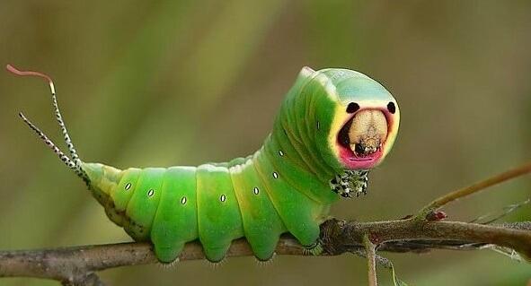 Böceklerin inanılmaz görüntüleri