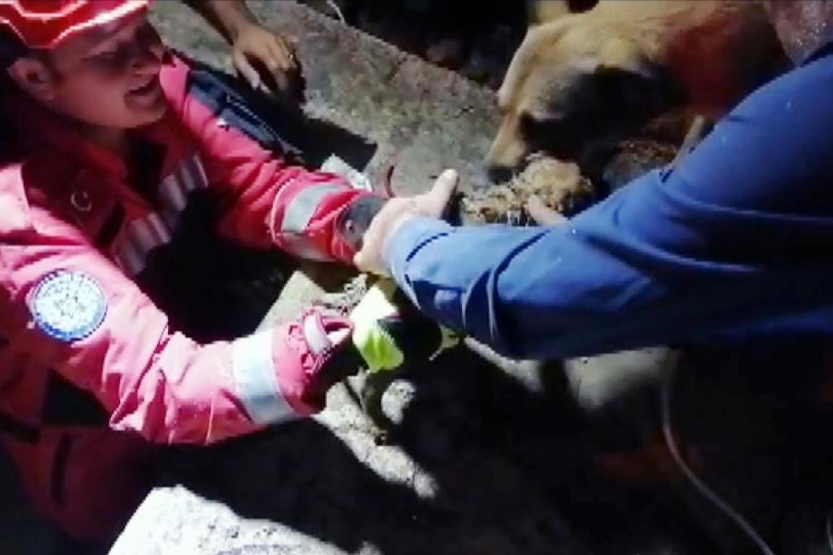 Anne köpeğin yavrusu ile duygulandıran buluşması