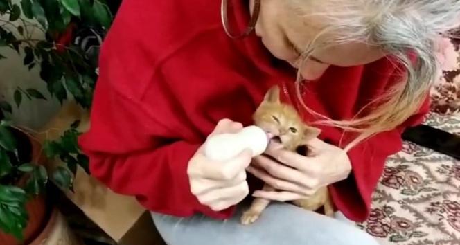 Annesi ölen yavru kediyi biberonla besliyor