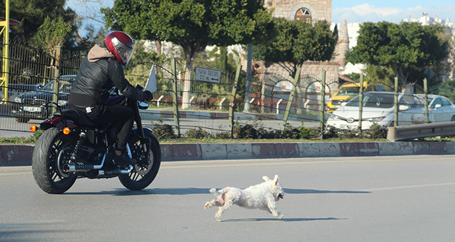 Antalya'da sahibini kaybeden köpek trafiği birbirine kattı