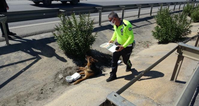 Antalya'da yaralı köpeğe trafik polisi şefkati