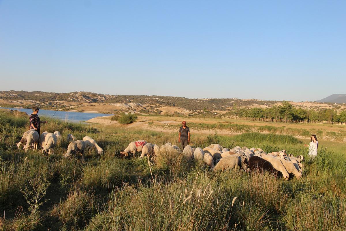 Çoban değil, Birleşmiş Milletler gibi aile
