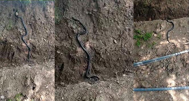 Diyarbakır'da dev yılan paniği