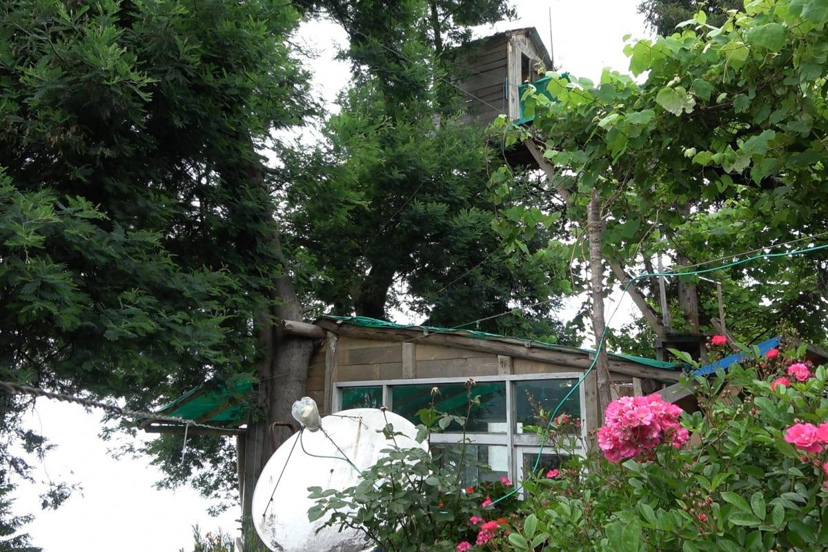 Düştüğü ağaca ev yaptı