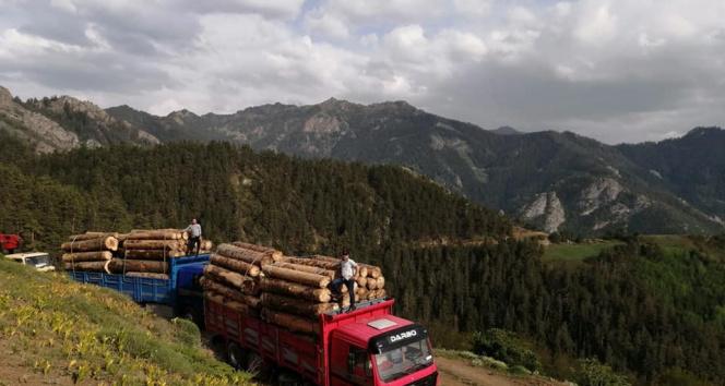 Ekmek parası için tomruk yüklü kamyonları tehlikeli dağ yollarında kullanıyorlar