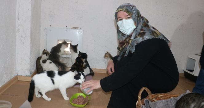 Engelli sokak kedilerinin annesi yaptığıyla takdir topluyor