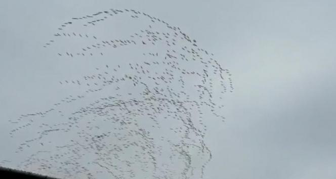 Göç eden leylek sürüsünün gökyüzünde dansı