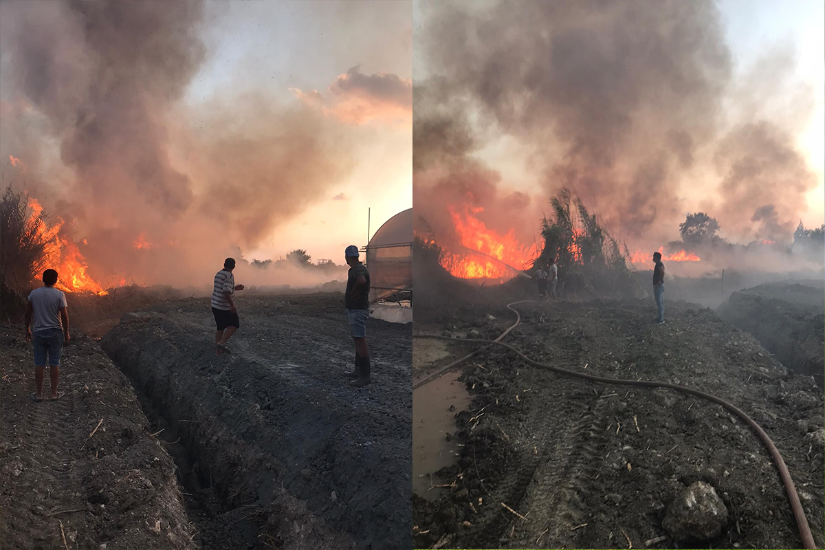 Hatay'da sazlık alanda yangın korkuttu