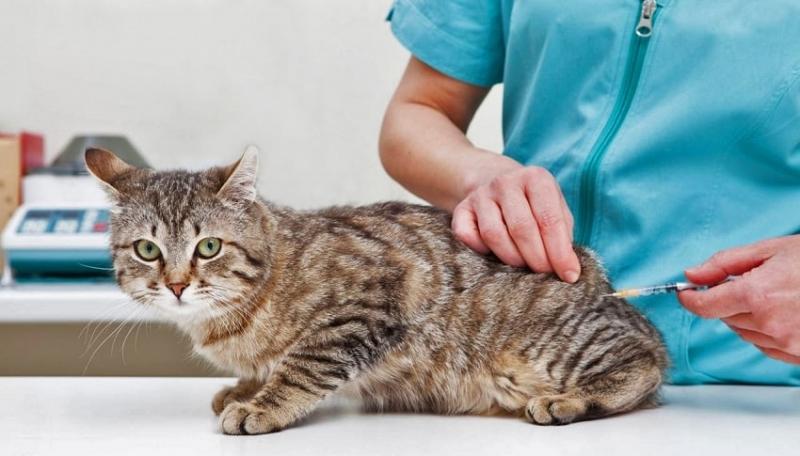 Hayvan Dostlarımızın Sağlığının Önemi