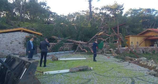 Hortum çatıları uçurdu, asırlık ağaçları da kırdı...Başkan olay yerini inceledi