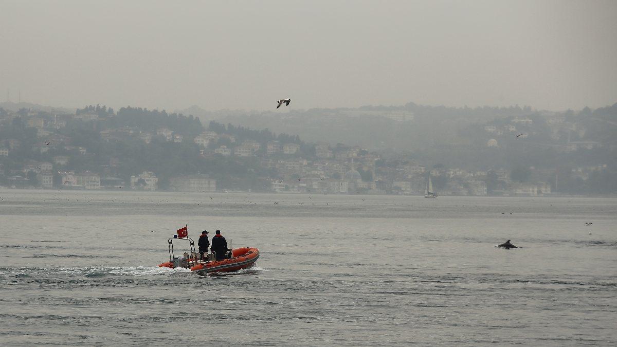 İstanbul Boğazı'nda, yağmurla birlikte yunus balıkları görüldü