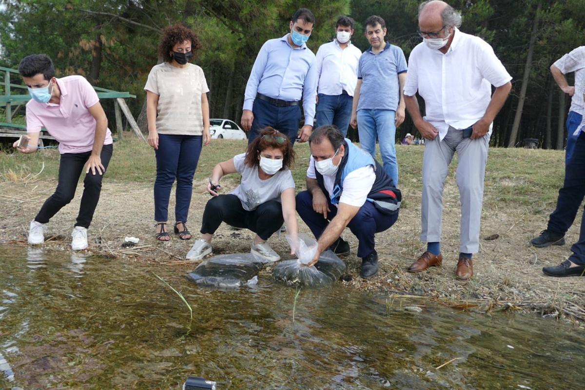İstanbul'da 14 gölette 573 bin 500 adet sazan yavrusu bırakıldı