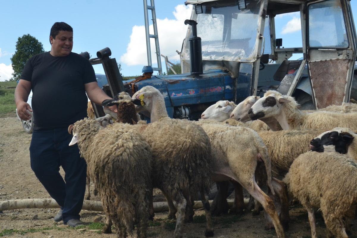 İstanbul'da 7 bin lira maaşı bıraktı, köyünde çobanlığa başladı