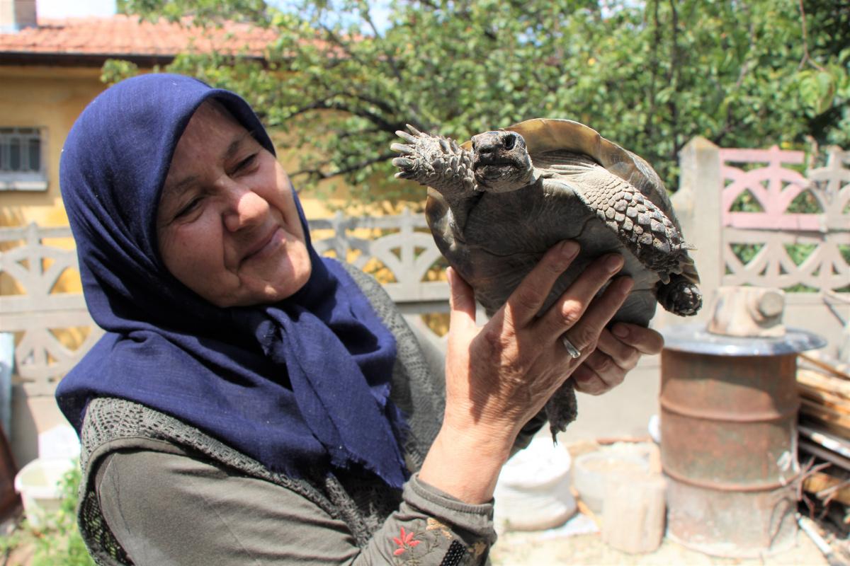 Kaplumbağa terbiyecisi Zekiye teyze