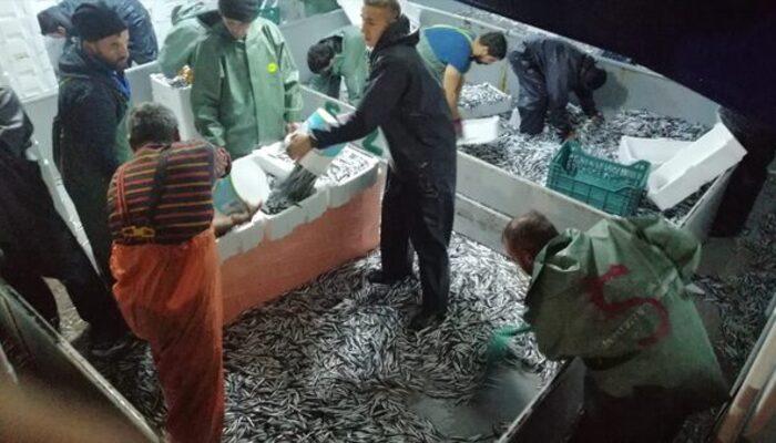 Karadeniz'de hamsi bereketi! Zonguldak'ta balıkçılar 10 ton hamsiyle limana döndü