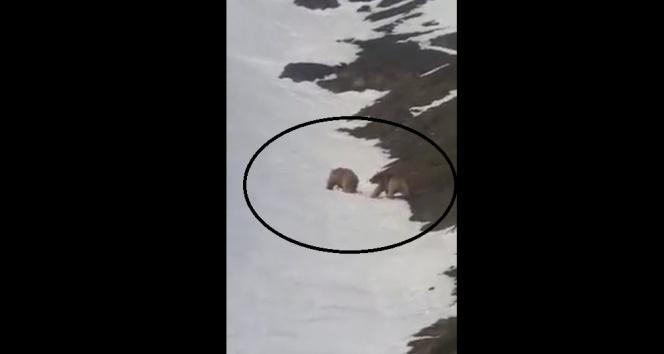 Kış uykusundan uyanarak doğaya çıkan ayılar kameraya yansıdı