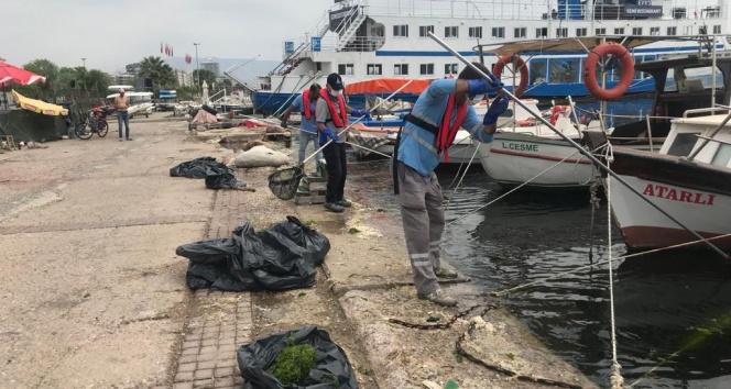 Körfez'deki deniz marulları temizleniyor
