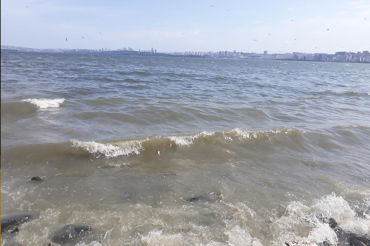 Küçükçekmece Gölü sahiline ölü balıklar vurdu