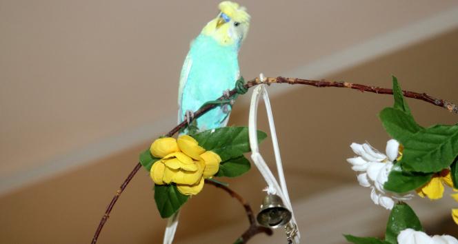 Kuş dile geldi, PKK'ya beddua etti