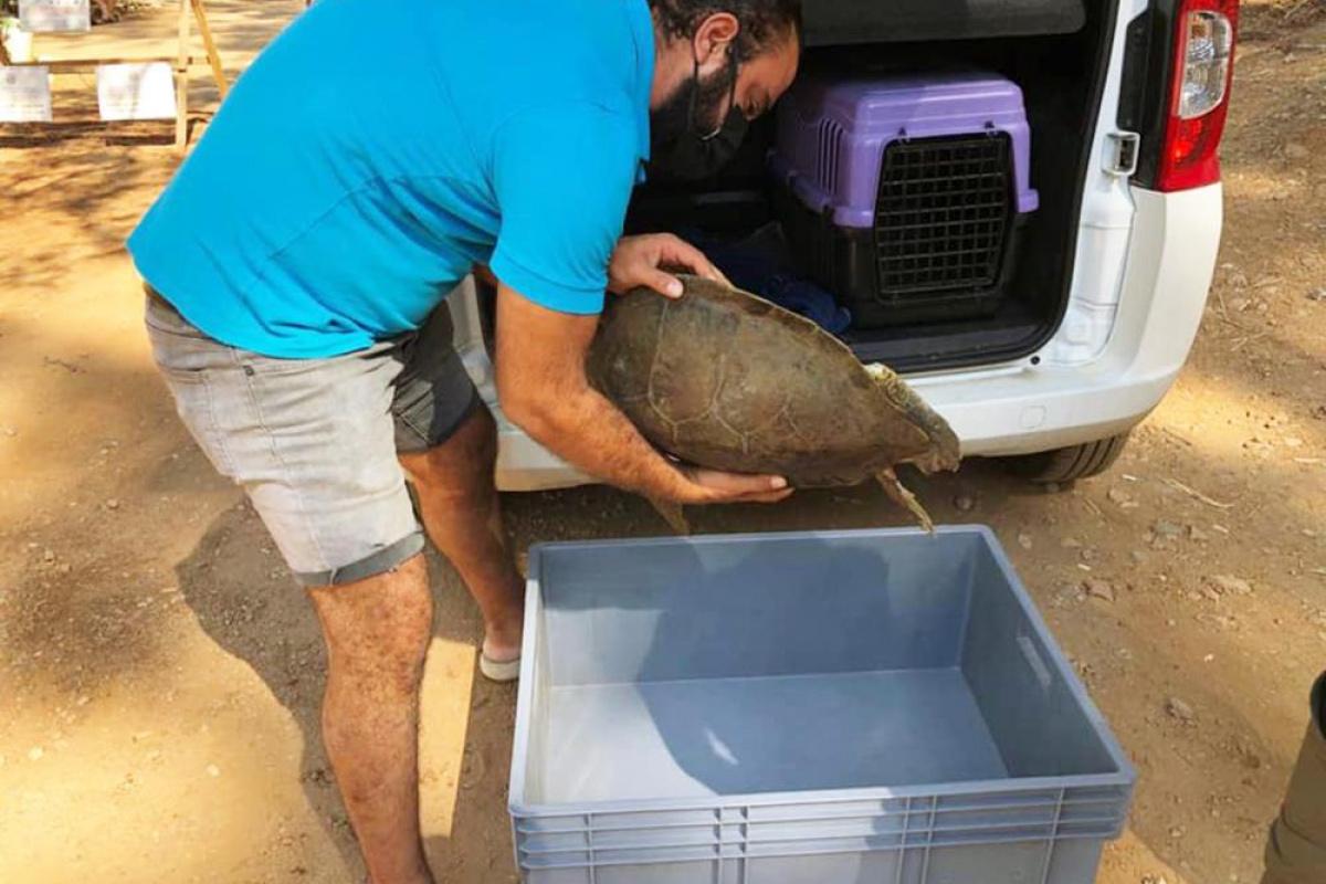 Marmaris'te yaralı yeşil deniz kaplumbağası bulundu