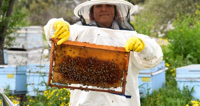Mersin'de 708 arı yetiştiricisine belediyeden ekipman desteği