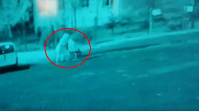 Öldürdükleri DEAŞ mensubunun cesedini dikkat çekmemek için tekerlekli sandalyeyle evden çıkarmışlar