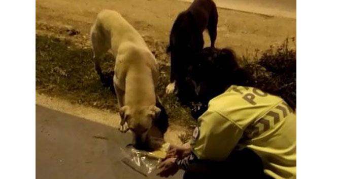 Radar polis memuru iftar kumanyasını sokak köpeklerine verdi