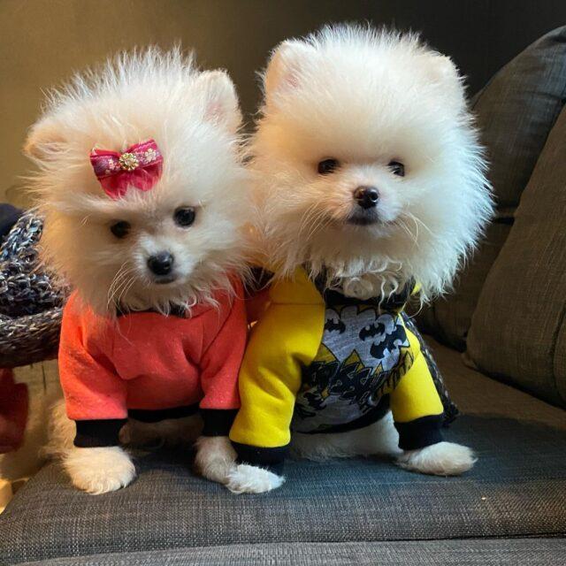 Royal Dog Club küçük dostlarımızın eğitilmesini de büyük bir rol oynuyor