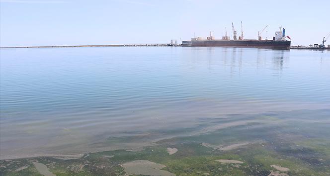 Samsun Limanı'nda tedirgin eden kirlilik: Gözler gemilerde