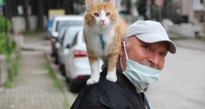 Şehir şehir, sokak sokak kedisini omuzunda gezdiriyor