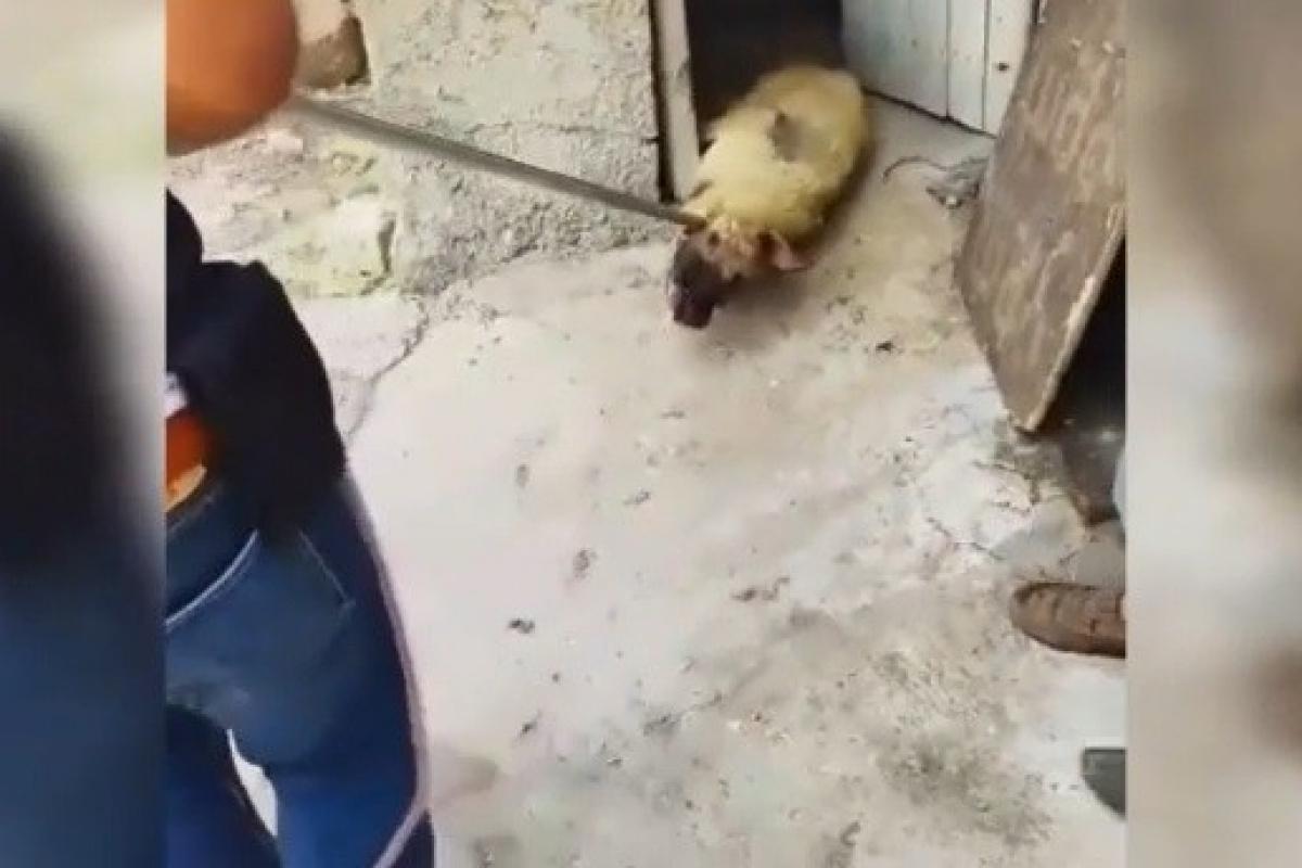 Siverek'teki görüntü hayvanseverleri ayağa kaldırdı