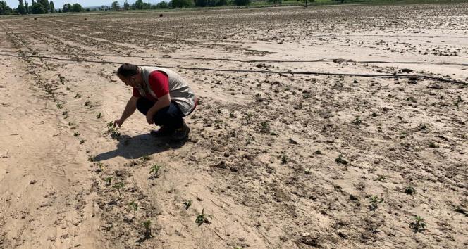 Sular altında kalan tarım alanlarında hasar tespiti başladı