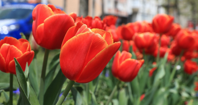 Sultangazi rengarenk çiçeklerle bezendi