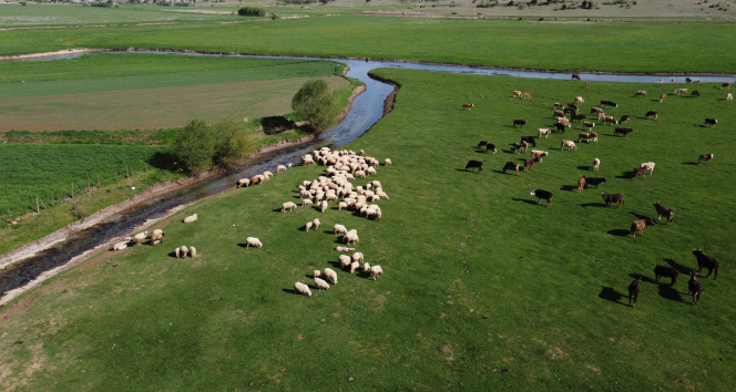 Tam kapanmada besiciler ve çobanlar yaylalarda mesaide