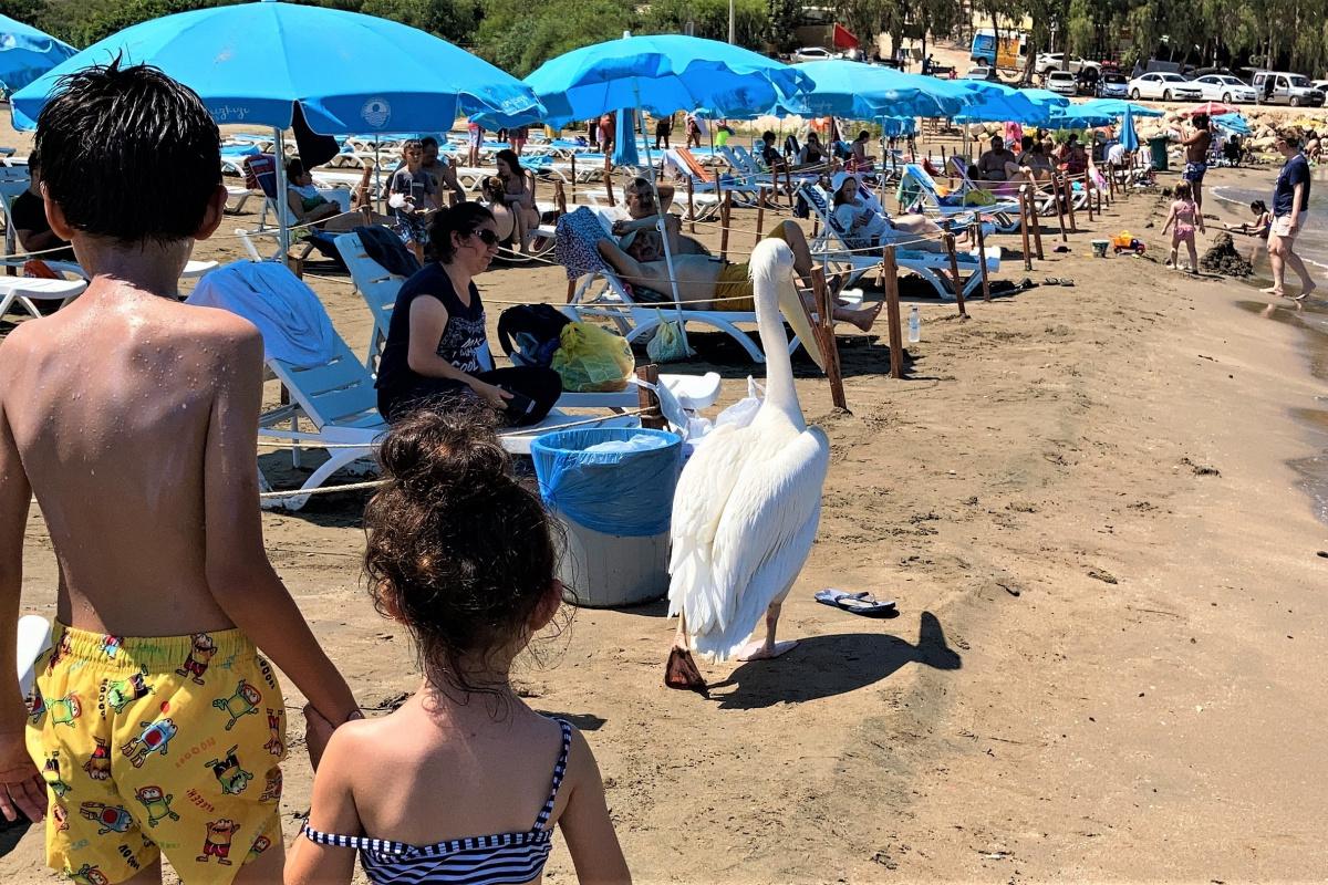 Tatilcilere renk katan pelikanlarla 25 yıllık dostluk