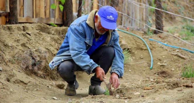 Yetişmez denilen bitkiyi konservede yetiştirip toprakla buluşturdu