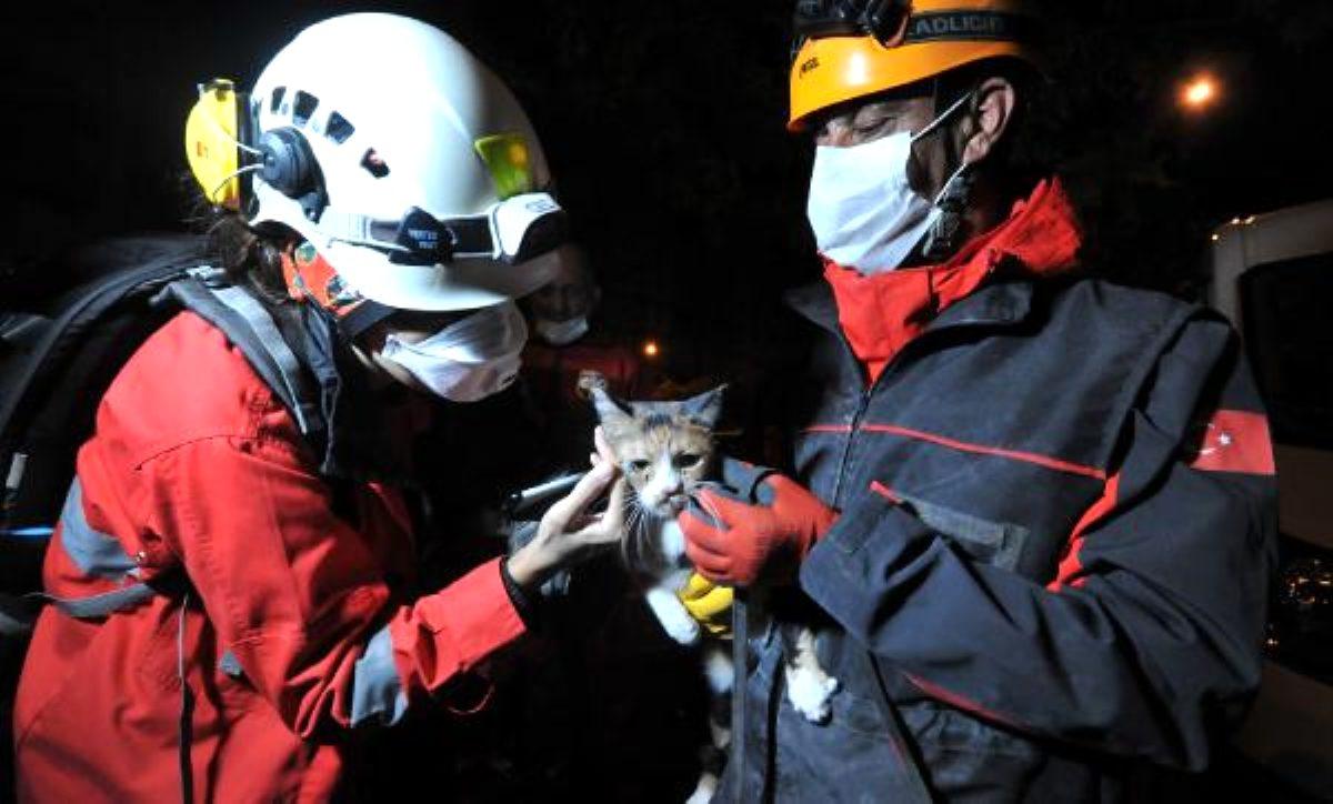 Yılmaz Erbek Apartmanı\'nın enkazından arama köpeğinin bulduğu kedi, kurtarıldı