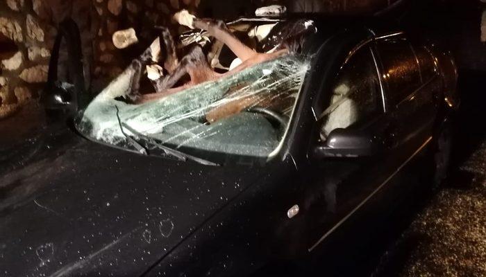 Adıyaman'da otomobilin çarptığı at aracın içine girdi