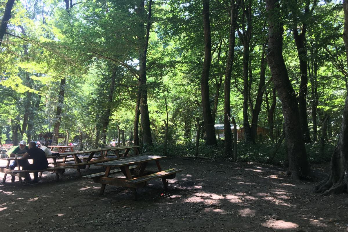 Belgrad Ormanı adeta ıssızlığa büründü