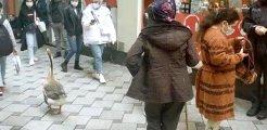 Cadde ortasında ilginç anlar! Köpek gezdirir gibi 'Kaz' gezdirdi, görenleri şaşkınlığa uğrattı