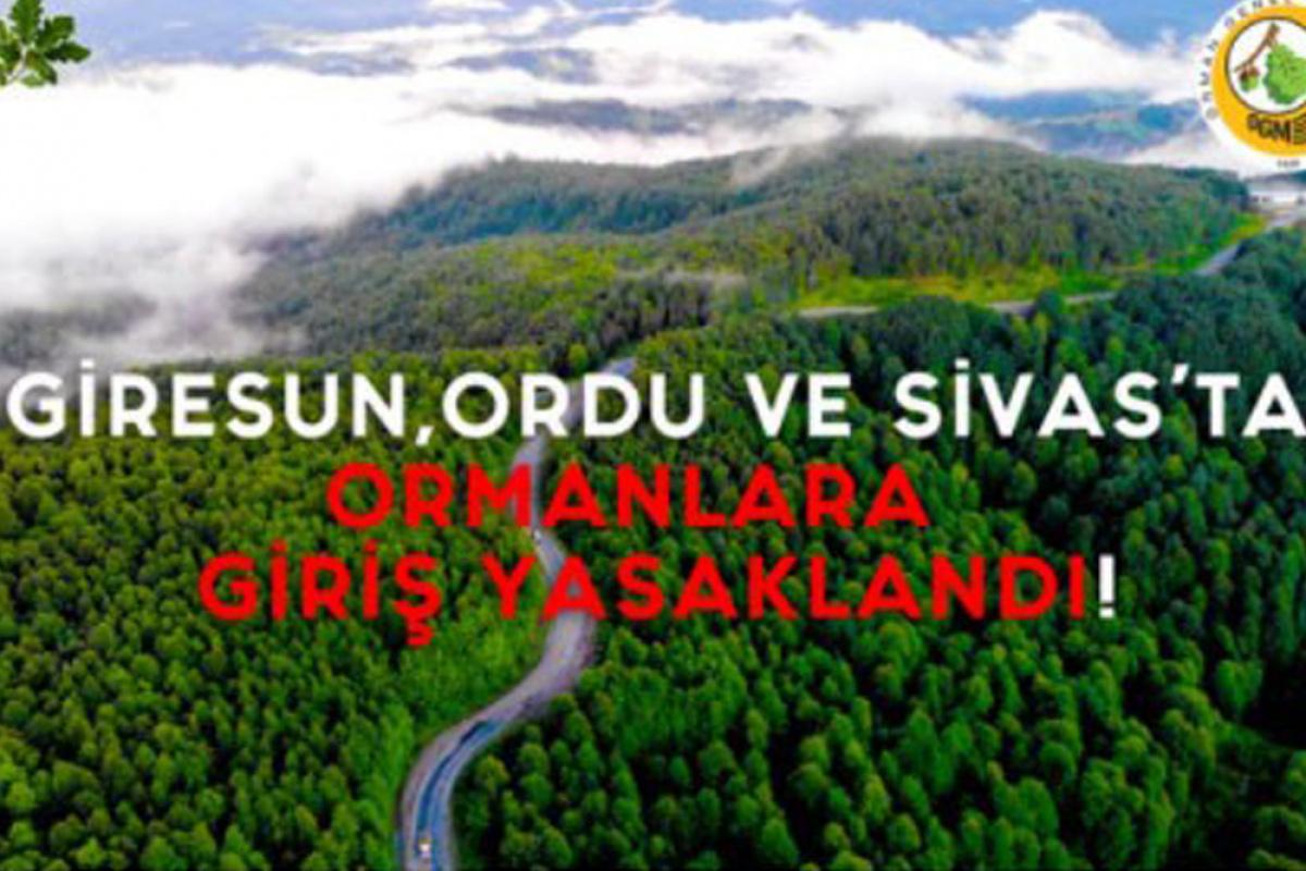 Giresun, Ordu ve Sivas illerinde ormana girmek yasaklandı