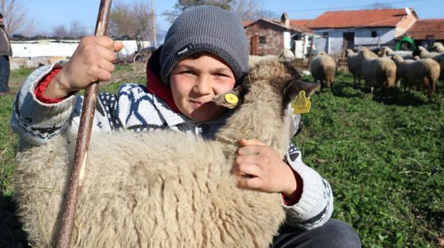 Hem okuyup hem çobanlık yapan Şevki, sosyal medyada fenomen oldu