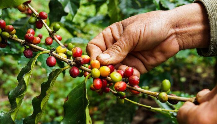 Kahve fiyatları altı yılın zirvesini gördü! Son bir haftada yüzde 25 fiyatı arttı