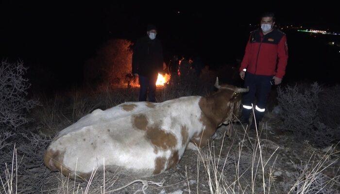 Kırıkkale'de ayağı kırılan inek dağda mahsur kaldı: Köylüler helikopterle kurtarılmasını istiyor