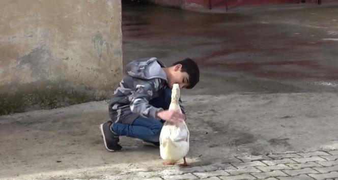 Küçük Yusuf'la ördeğin dostluğu