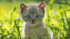 N&D Marka Kedi Maması Çeşitleri ve Fiyatları - Zoo.com.tr'de