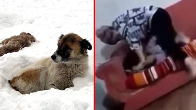 Sosyal medya bunu konuşuyor! Kızını boğmaya çalışan anne, ölen yavrularının başında 5 gün bekleyen köpeği hatırlattı