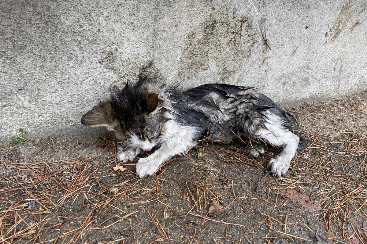 Yağmurda sırılsıklam ıslanan yavru kediye belediye sahip çıktı