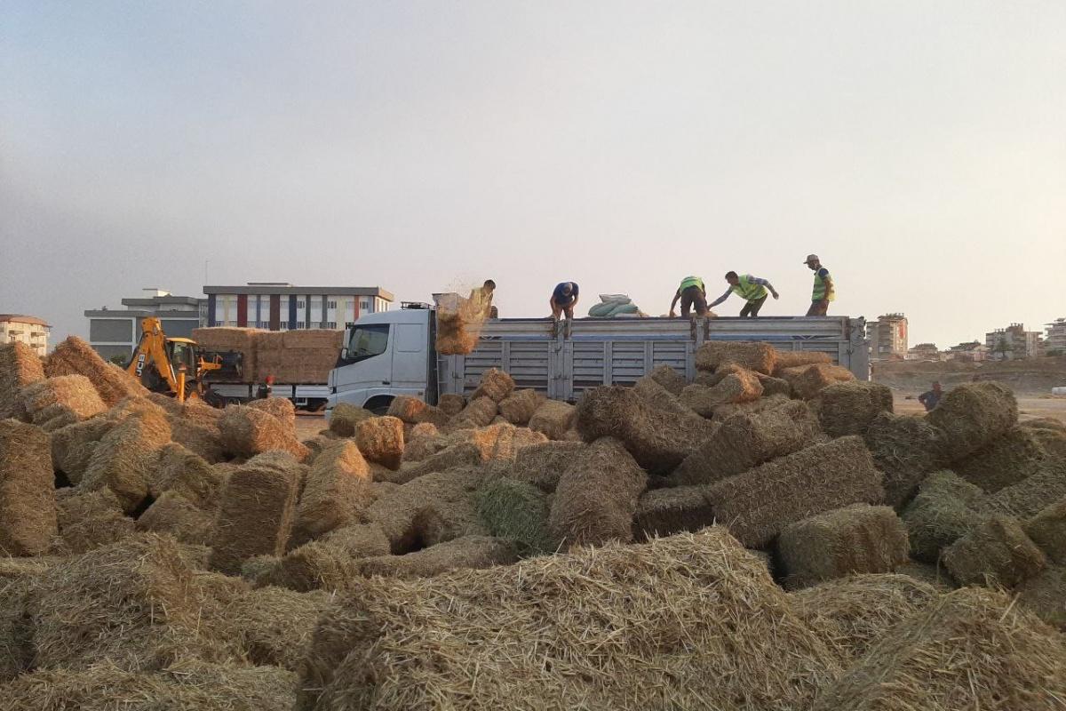 Yangında zarar gören çiftçiye yem ve saman dağıtılıyor